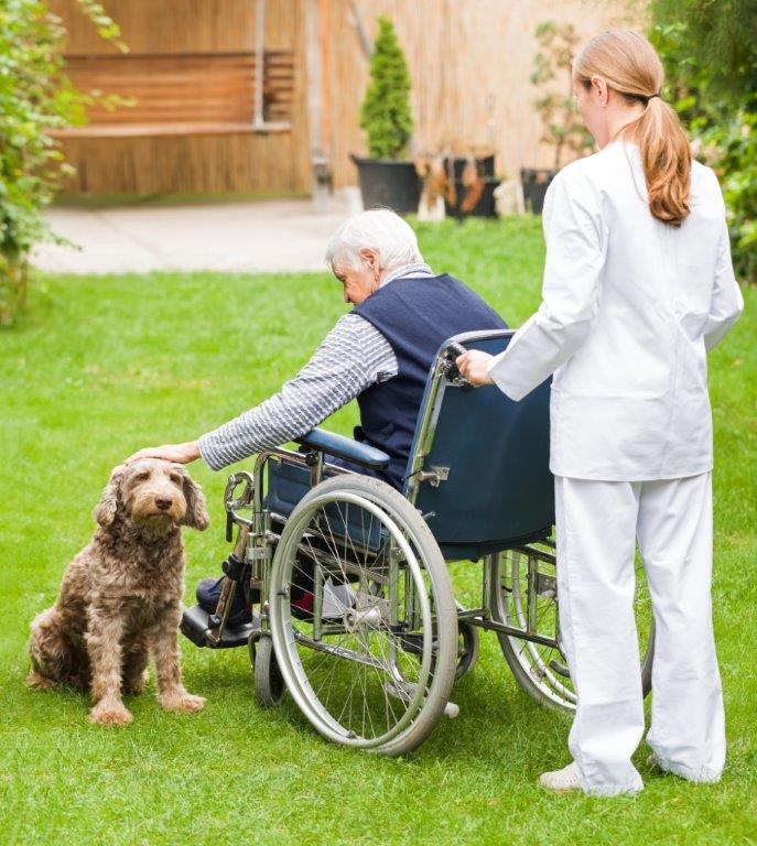 Hospice and Pets
